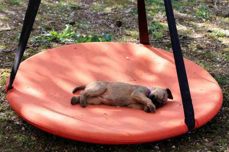 R-Wurf Ruby schläft auf Schaukel