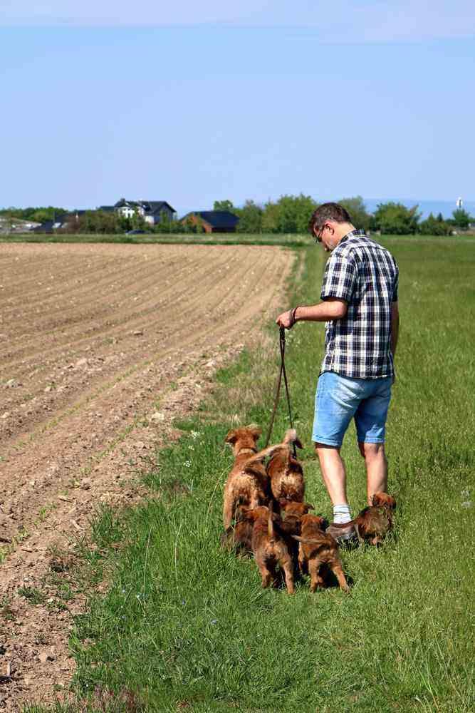 Irish Terrier Zucht Welpen R-Wurf Abschied