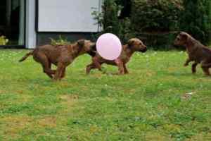 R-Wurf Ausflug mit Luftballons