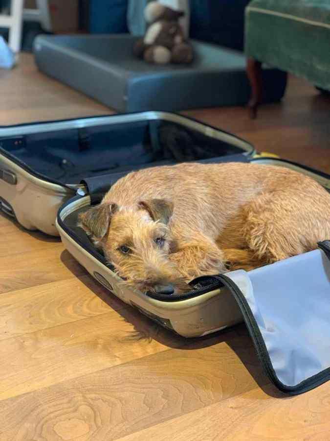 Radagast im Koffer