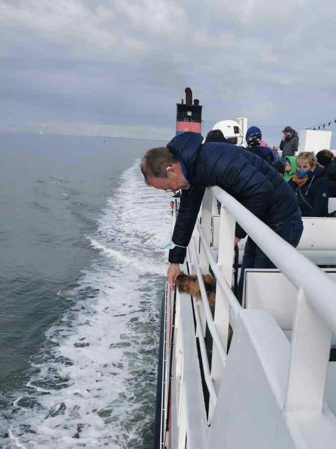 irish Terrier Rookie auf dem Schiff