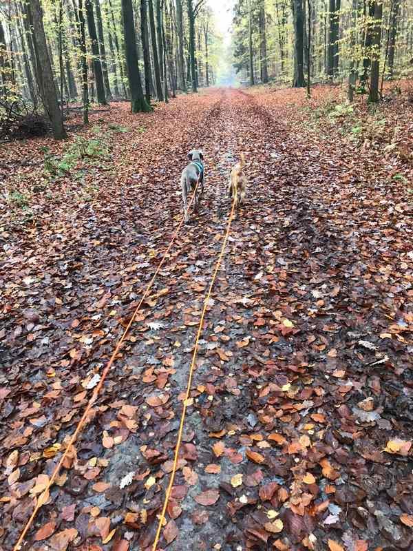 Ruby auf der Jagd