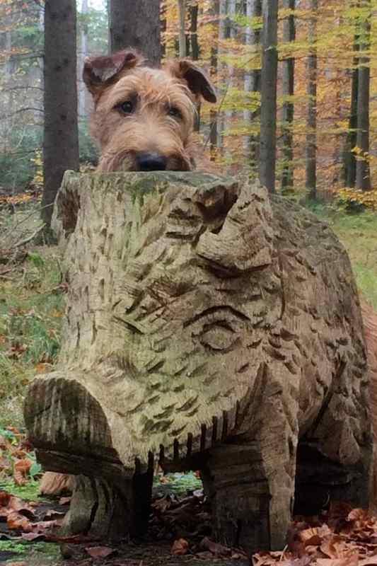 Rusty mit Wildschwein
