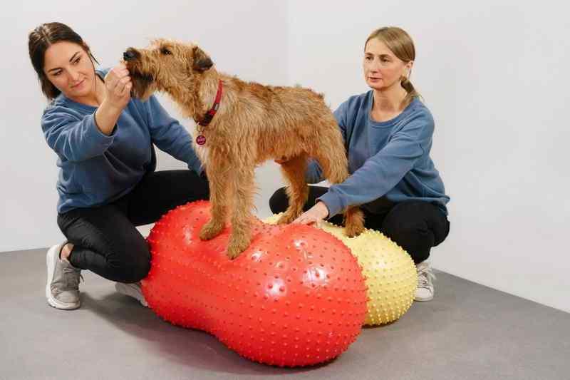 Irish Terrier Radagast Therapiehund Wackelkissen