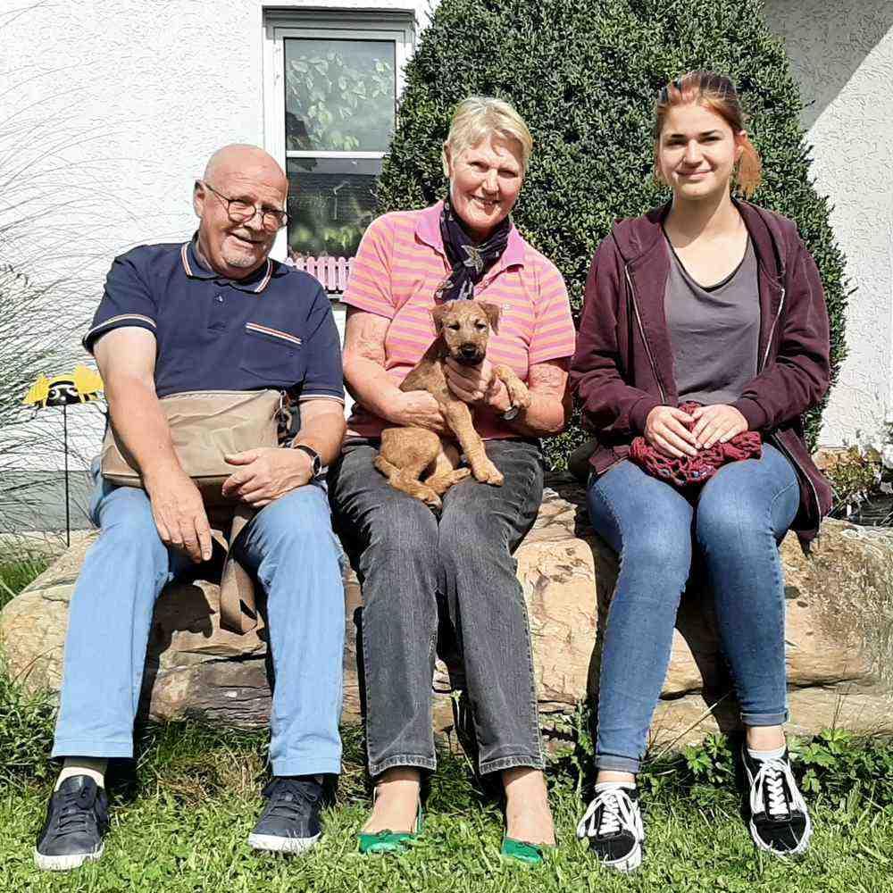 Irish Terrier Sienna vom Hürtgenwald mit neuer Familie